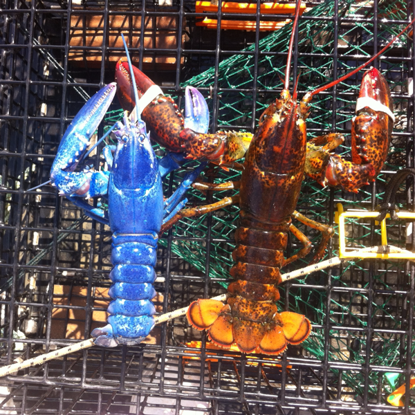 Lobster Sales In Massechusetts